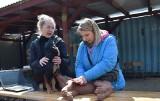15 ucisków i dwa oddechy, ale nie do pyska, do nosa. Jak ratować psa? Mieszkańcy Książa Śląskiego koło Nowej Soli już wiedzą