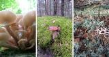 Grzyby na Pomorzu. Ciepły koniec września to (ostatnia) nadzieja na ich prawdziwy wysyp? Jest po co wybierać się do lasu!