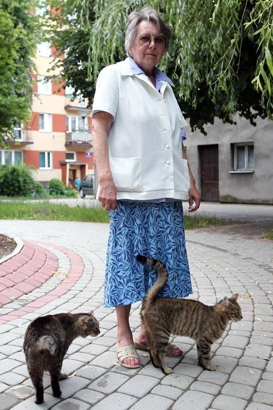 - Od kiedy za dokarmianie bezpańskich kotów można stracić mieszkanie? – pyta pani Danuta, wstrząśnięta groźbami prezesa spółdzielni.