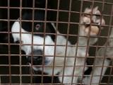 Bezpańskie psy zagrażają mieszkańcom. Ludzie się boją
