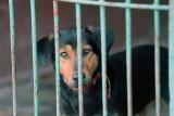 Schroniska dla bezdomnych zwierząt liczą na naszą pomoc. Czekają na nasz 1 procent