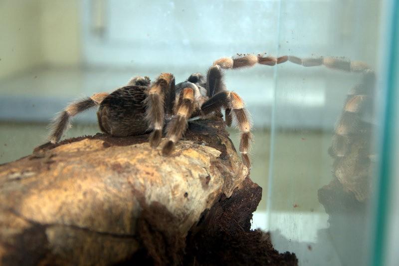 Wystawa gadów i pająków we Wrocławiu. Możesz wziąć węża lub pająka na ręce [ZDJĘCIA, CENY BILETÓW]