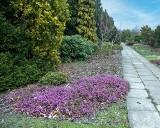 Piękne miejsca w ogrodzie botanicznym w Łodzi. ZDJĘCIA Kwitną krokusy i przylaszczki, lada dzień rozwiną się forsycje, ale na tym nie koniec
