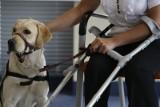"""Bydgoski MOPS organizuje nabór do programu """"Psi opiekun"""". Czworonożni przyjaciele pomogą niepełnosprawnym"""