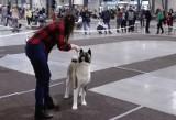 Najpiękniejsze psy z całej Europy przyjechały na 22. Międzynarodową Wystawę Psów w Expo Silesia ZDJĘCIA