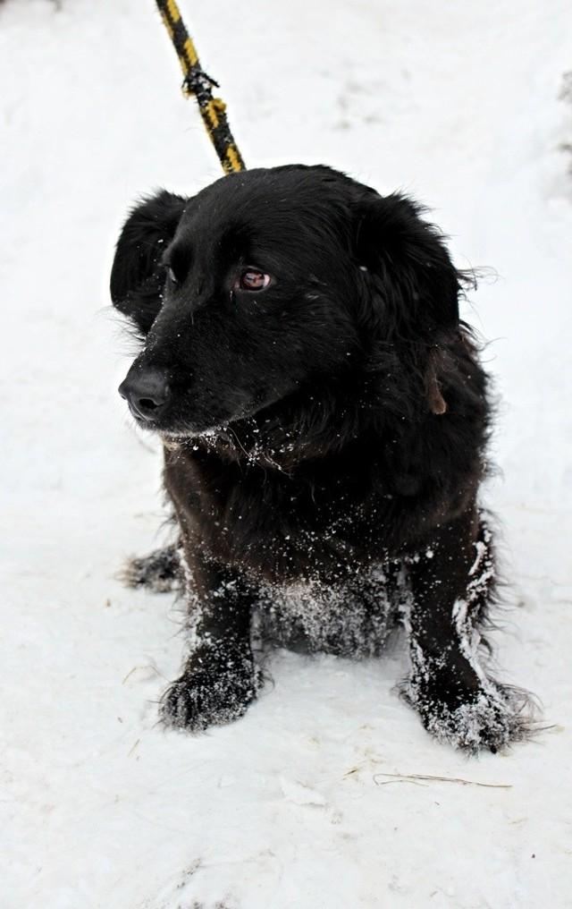 pies mały, czarny, kudłaty, 3 lata