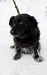 Psy z nowotarskiego schroniska czekają na adopcje [GALERIA]