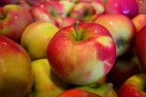 Jabłka dla międzyrzeczan
