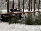 Groźne wypadki na drogach pow. krośnieńskiego. Jedno auto wpadło w poślizg i uderzyło w drzewo. Drugie wypadło z drogi przy omijaniu sarny