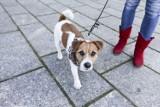 """Parlamentarzyści chcą, żeby psy mogły biegać bez smyczy: """"Pies musi się wybiegać"""""""