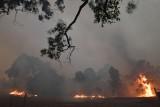 Pożary buszu w Australii. Ludzie uciekali do morza przed płomieniami. Wojsko rusza na pomoc poszkodowanym