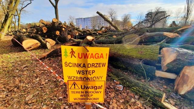 W 2020 r. w Gorzowie zniknęło ponad 2 tys. drzew. Siekierezada miała miejsce m.in. przy ul. Walczaka (zdjęcia z 22 stycznia)