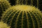 Takich kaktusów jeszcze nie widziałeś