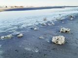 Ekolodzy alarmują. Na bałtyckich plażach pojawiła się parafina