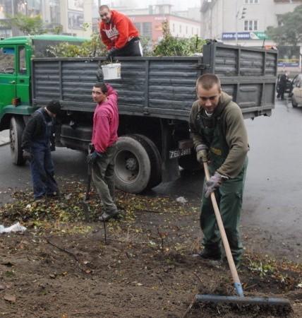 W tym miejscu stanie pomnik Ignacego Łukasiewicza. Wokół niego robotnicy posadzą nowe krzewy.
