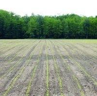KE uważa, że polscy rolnicy mogli zawyżać powierzchnię upraw, a ARiMR nie mogło tego zweryfikować