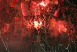 Derby: Jak Śląsk przegrał z Zagłębiem 0:7. Derby Dolnego Śląska - najwyższa porażka, najwyższe zwycięstwo