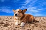 Plaże nad Bałtykiem dostępne dla psów [adresy plaż] Wypoczywaj nad morzem razem z psem