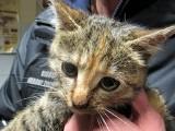 Niezwykła akcja strażaków i ratowników: Wydobyli kotka z 35-metrowej studni [ZDJĘCIA, WIDEO]