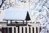 Jak dokarmiać ptaki zimą, by pomagać a nie szkodzić? Wiele osób robi to źle