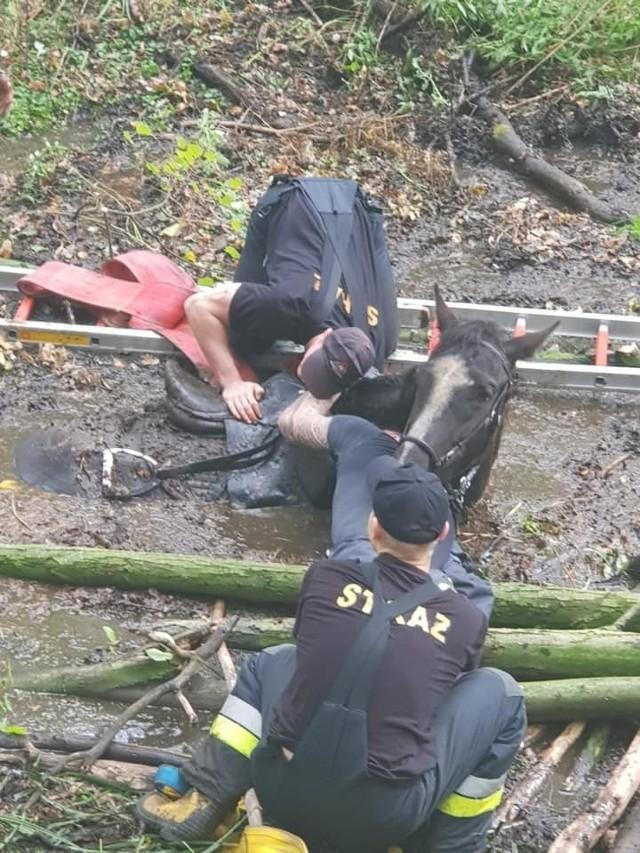 Pracownicy MPWiK z pomocą straży miejskiej uratowali konia i jego 20-letnią właścicielkę
