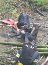 Pracownicy MPWiK uratowali konia. Co to była za akcja!