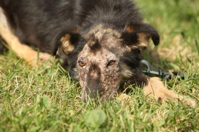 Ten pies został wrzucony do rzeki koło Lubartowa. Miał do szyi przywiązane obciążenie. Sprawcy nie znaleziono