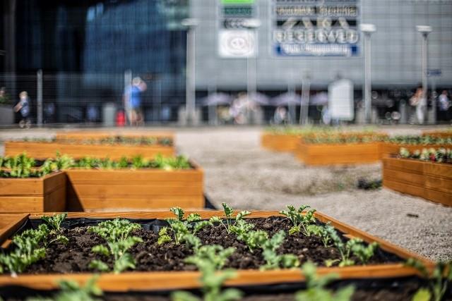 Przed nami ostatnie dni działania Miejskiej Farmy przy Galerii Katowickiej.
