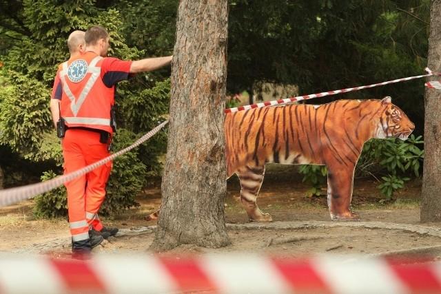 Tygrys z wrocławskiego zoo śmiertelnie pogryzł pracownika