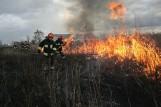 Sezon na głupotę. Nie uwierzysz, ile osób wznieca pożary na łąkach! [najnowsze dane straży]