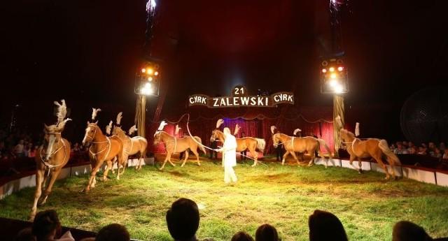 Konie z Cyrku Zalewski maści Palomino wykonały obłędny taniec, nagrodzony gromkimi brawami. Ich opiekunem i treserem był sam Kamil Zalewski.