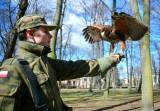 Drapieżne ptaki pojawiły w radomskich parkach. Zobacz zdjęcia