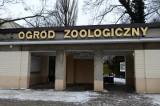 """17 lutego. Co się wydarzyło? Poznańskie zoo ma nowych lokatorów [Z ARCHIWUM """"GŁOSU""""]"""
