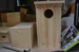 Budują budki lęgowe dla ptaków. Znajdą się one na drzewach w parku. Jakie ptaki w nich zamieszkają?