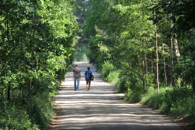 Mieszkańcy Skarpy mogą spać spokojnie. Trakt Leśny leśnym pozostanie, ciężarówki na pewno tędy nie pojadą