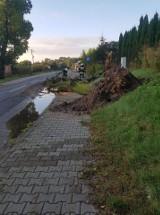 Drzewo przewróciło się na drogę między Kołacinem i Brzezinami