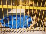 Toruńskie schronisko prosi o baseniki dla psów. One też potrzebują ochłody