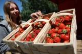 Młodzi mogą szykować się do letniej pracy pod Grudziądzem [SZCZEGÓŁY OFERTY]