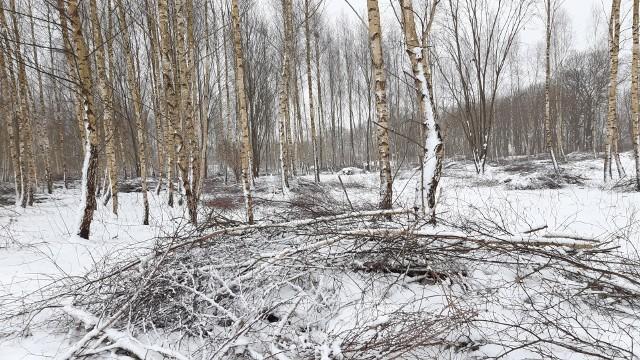 Trwa wycinka drzew pod budowę osiedla deweloperskiego przy ul. Szpilewskiego w Słupsku.