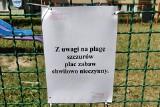 """Lublin: Administracja nadal walczy ze szczurami na placu zabaw na Czechowie. """"Kontrolujemy to miejsce trzy razy dziennie"""""""