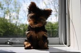 Dzień Psa. Pokażcie nam swoich psich przyjaciół!
