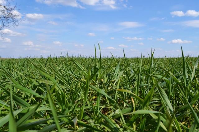Przegląd najnowszych doniesień z firm branży agro