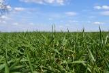 Wieści z branży agro. Anwil z innowacjami, John Deere kończy współpracę z Kuhn, Innvigo poszerza grono przedstawicieli