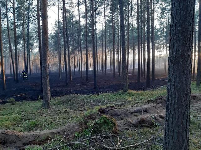 Pożar lasu w Kwiatkowie gm. Chorzele 02.07.2019.