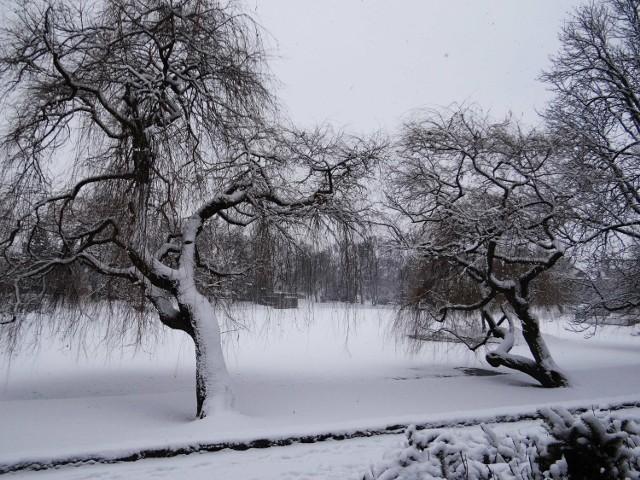 Zimowy Racibórz w obiektywie Stachowa