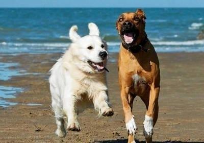Psie zabawy na plaży? Nie na każdej i tylko w wyznaczonych miejscach. FOT. 123RF