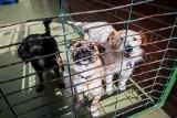 W bydgoskim schronisku rocznie do adopcji trafia około 1600 psów i 600 kotów. Nie zawsze załatwi się to od ręki