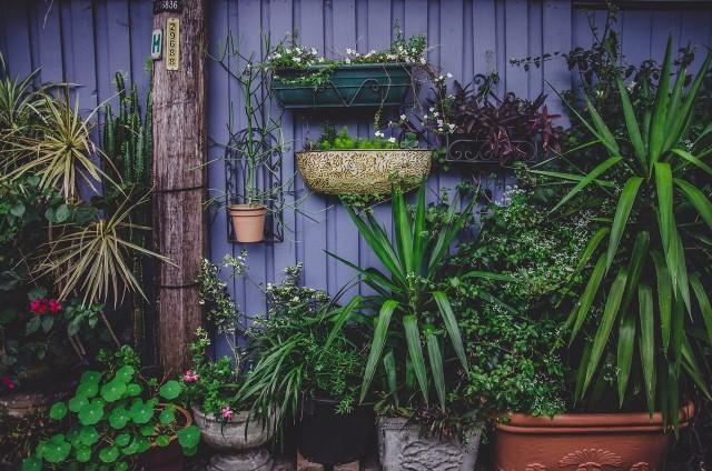 Jak się okazuje nie wszystkie rośliny są bezpieczne, w niektórych sytuacjach nasza domowa zieleń może okazać się trująca. Zobaczcie, jakie rośliny które mamy w domach i ogrodach mogą być trujące. Szczegóły na kolejnych zdjęciach >>>>