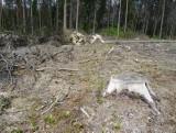 Ministerstwo: Polska realizuje wyrok TSUE. Przyrodnicy: To nie ochrona, a dalsza wycinka Puszczy (zdjęcia)