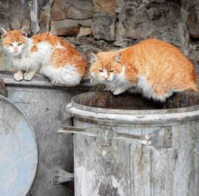 W Krakowie organizacje społeczne nie mogą sterylizować bezdomnych kotów ani szukać im domu. Mogą jedynie dokarmiać. FOT. INGIMAGE